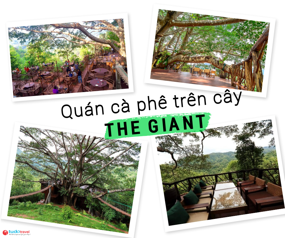 the giant chiang mai