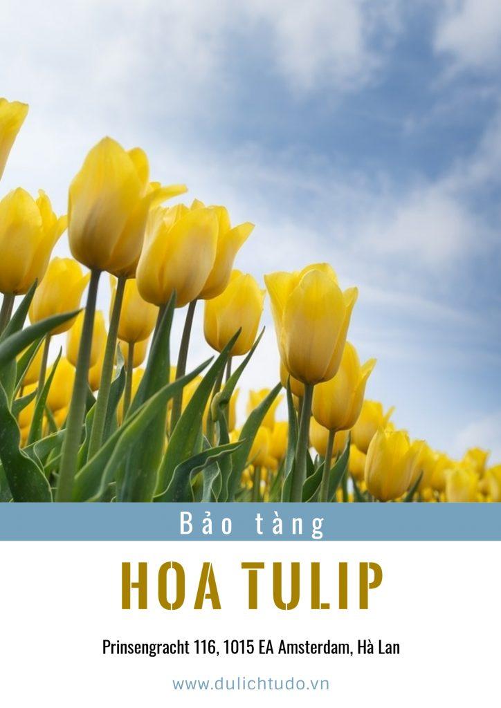 bảo tàng hoa tulip