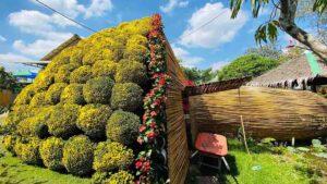 Vẻ đẹp độc, lạ của bó hoa cúc mâm xôi khổng lồ thu hút lượng lớn khách du lịch