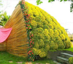 Bó hoa cúc mâm xôi khổng lồ ở làng hoa Sa Đéc
