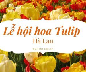 Lễ hội hoa Tulip Hà Lan